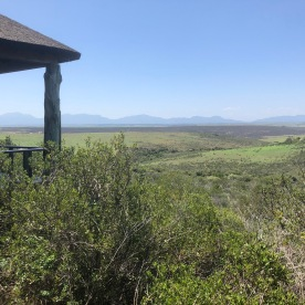 Safari lunch views